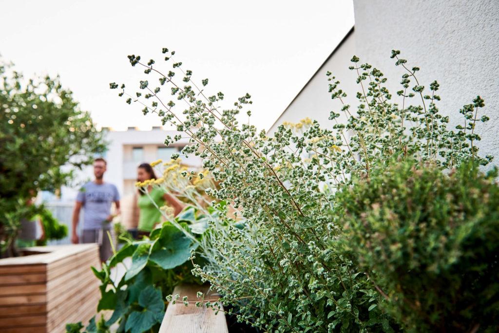 Grüne Dachterrasse dachterrassengestaltung tulpenbaum holzbau gartengestaltung