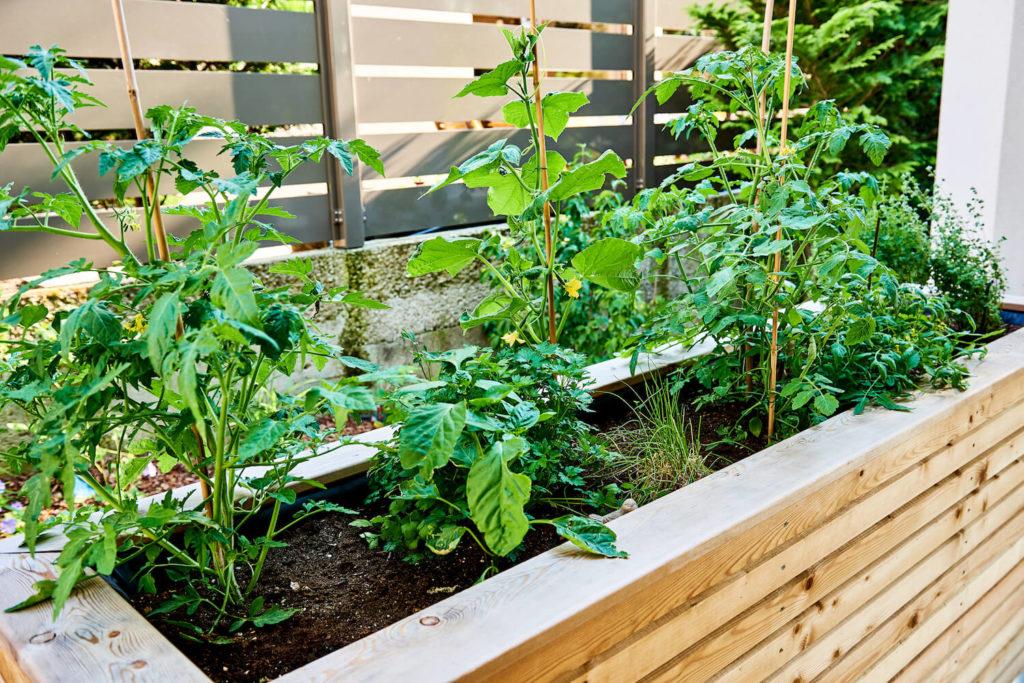 Hochbeet aus Holz mit Pflanzen