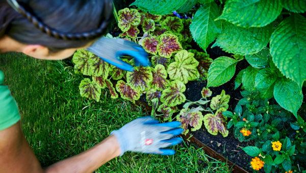 Gartengestaltung mit Beet