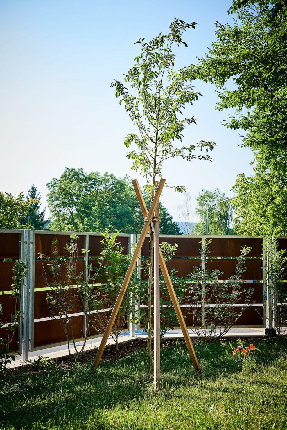 Baumpflege im Garten