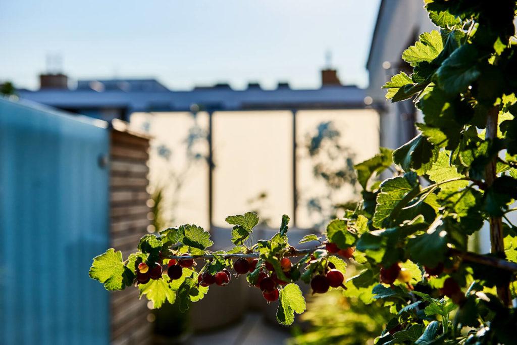 Holzbau gartengestaltung in wien nieder sterreich for Gartengestaltung 1230 wien