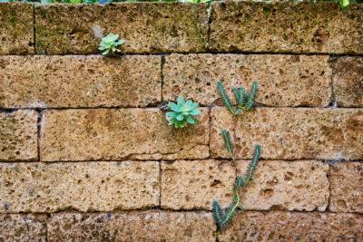 Wand mit Pflanzen