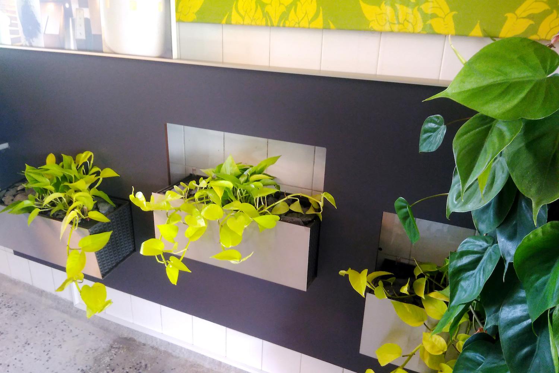 Innenraumbegrünung mit Pflanzen